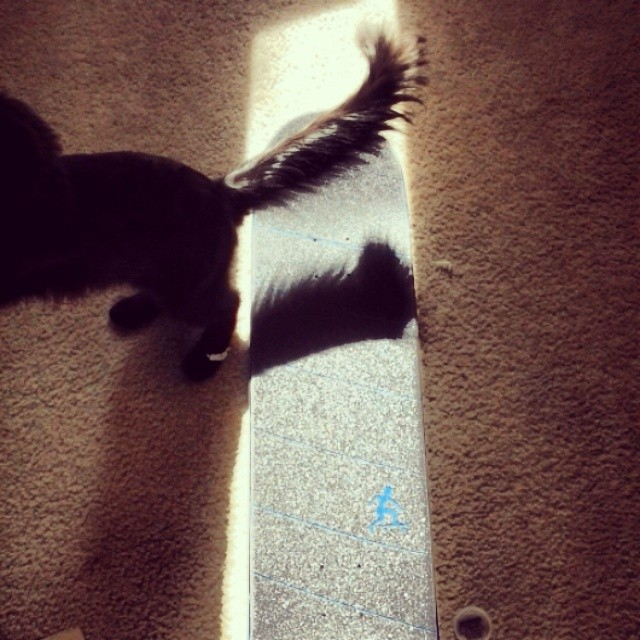 Our cat has a long tail. #tbt griptape. #absoluteboardco @monprimm