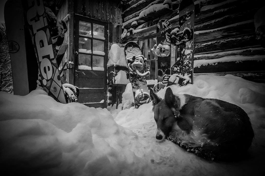Primo despertate que el invierno arrancó con toda y se vienen cosas buenas de @vanssnow y el estreno online de #RSFinDelMundo