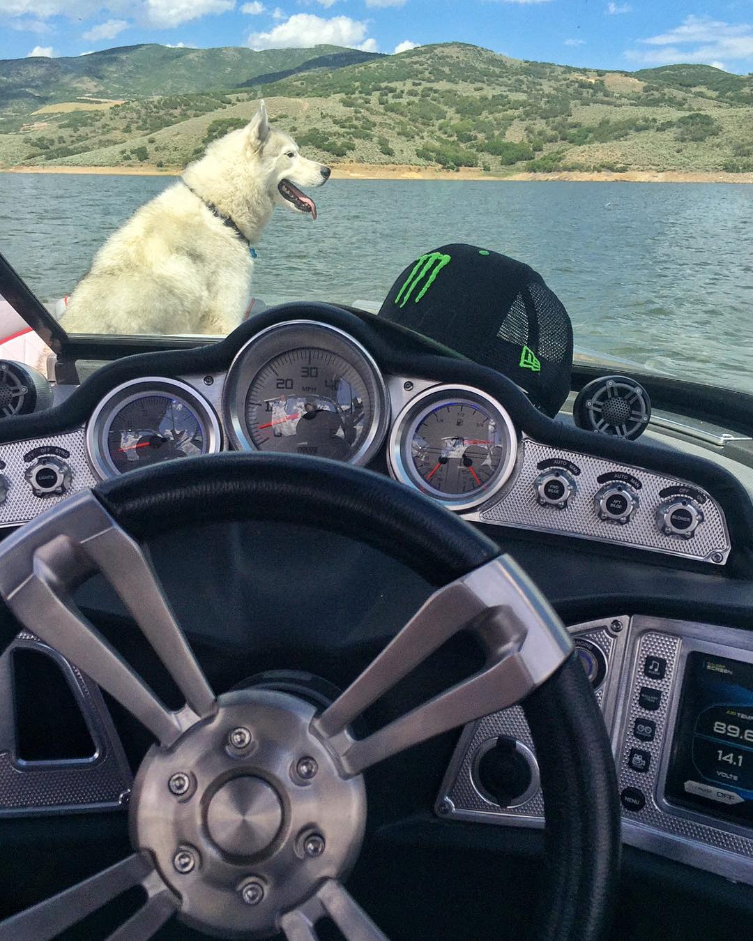 Siberian huskies don't really like water, but they LOVE to chase things. So even though Bentley doesn't really like the boat for swimming - he uses it as his platform to stalk all the deer/animals on the shore. Ha. #perched #alwayshunting #antiswimdog...