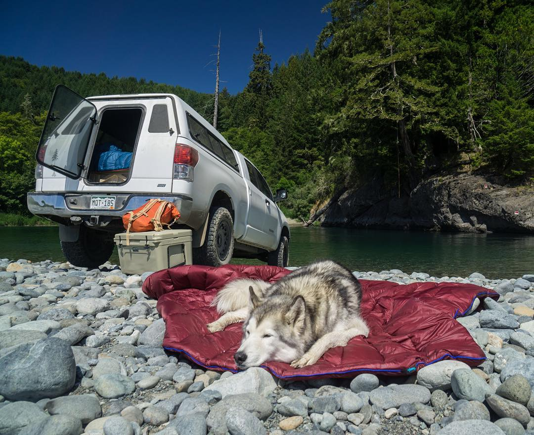 Does it look like I care that I'm laying on a bed of rocks? @loki_the_wolfdog |