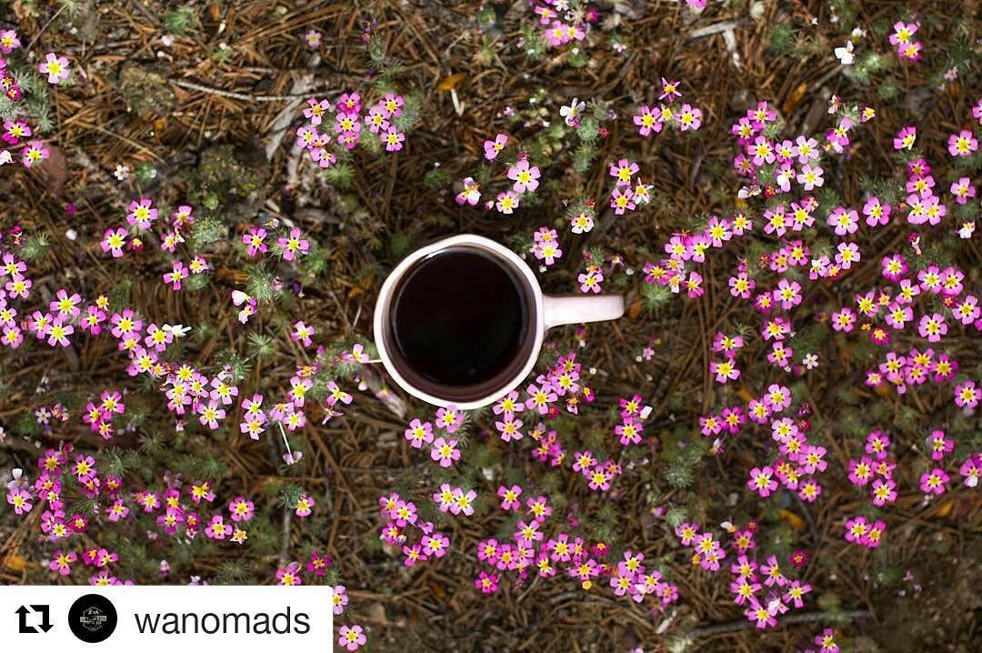 Nuestra taza rosa desde Yosemite National Park. BUEN DÍA!  #Repost @wanomads with @repostapp ・・・