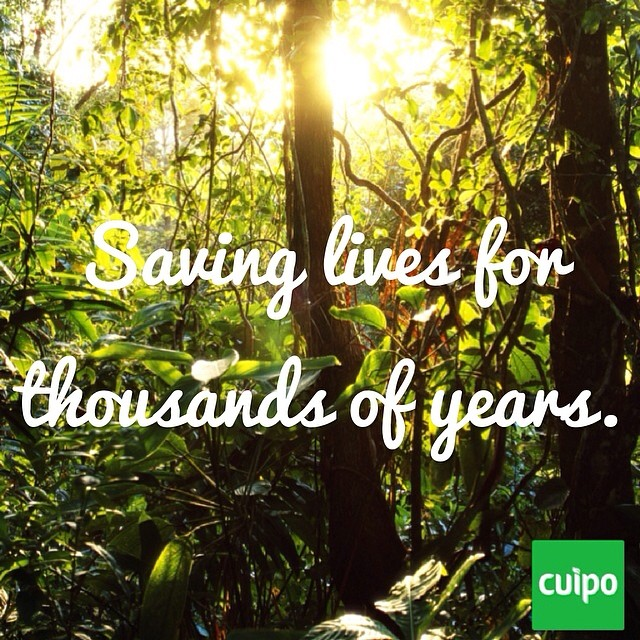 Seventy percent of the plants identified by the U.S. National Cancer Institute as useful in the treatment of cancer are found only in rainforests.#cuipo #saverainforest