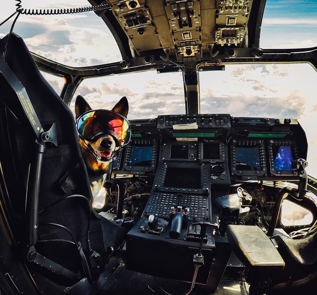 "Photo of the Day! ""This is your captain speaking...it's gonna be a ruff flight."" @abbiesurfs hanging out in a @marines #MV22Osprey, courtesy of #VMM-165. Rah, Abbie! #GoPro #GoProPet #USMC #Aviation #AvGeek #InstaAviation #FlyingDogs #"