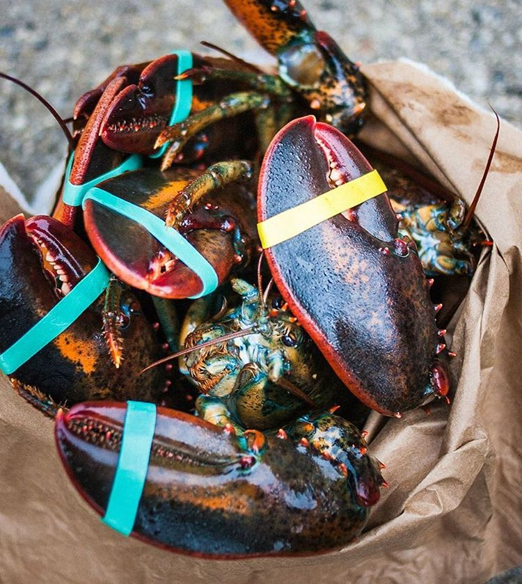 Summer full of color, bag full of lobsters. Cheers #Maine . Photo by @markyaggie