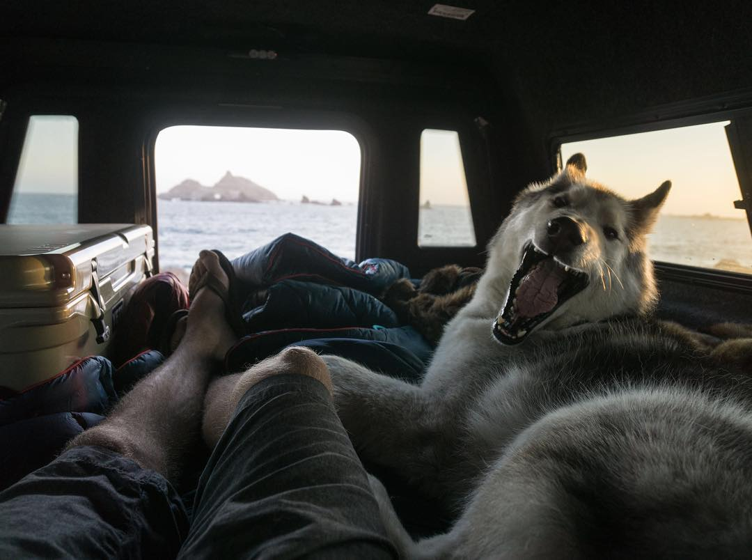 Big yawns with @loki_the_wolfdog #gorumpl |