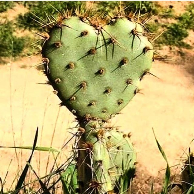 #ISeeHeartsEverywhere ❤️❤️ #lovenature #argentina