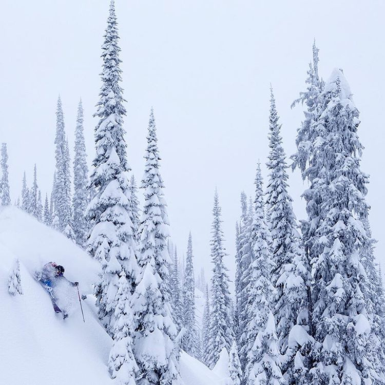 DPS Koala, Drew Petersen, takes to the trees during a memorable storm riding day at Sol Mountain Lodge, BC, with DPS Cinematic and @oskar_enander