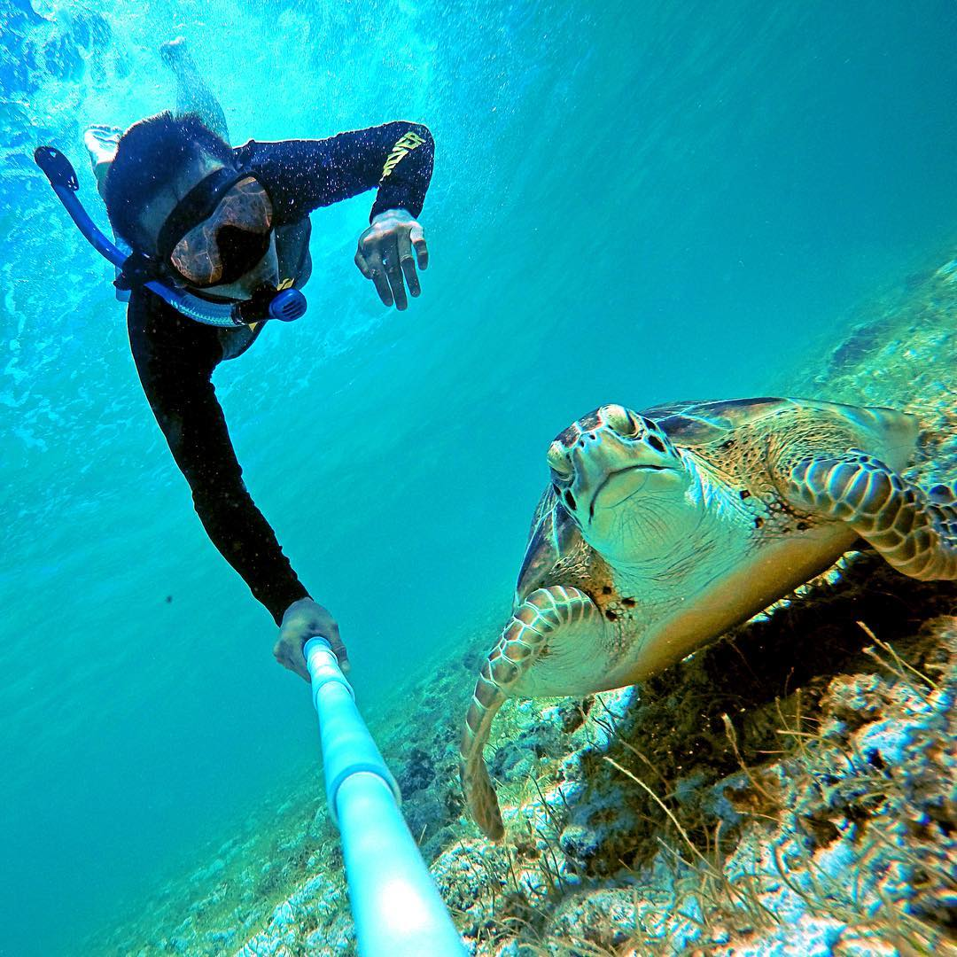Turtle Tuesday! Photo by @ozcarthegreat in the Cayman Islands. Shot with GoPro HERO4 & GoPole Reach. #
