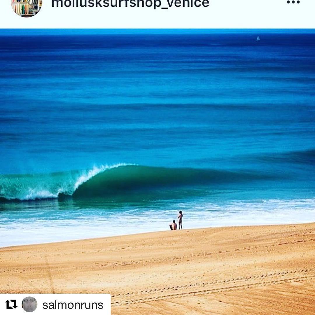 #Repost @salmonruns ・・・ #surfing #wavetribe