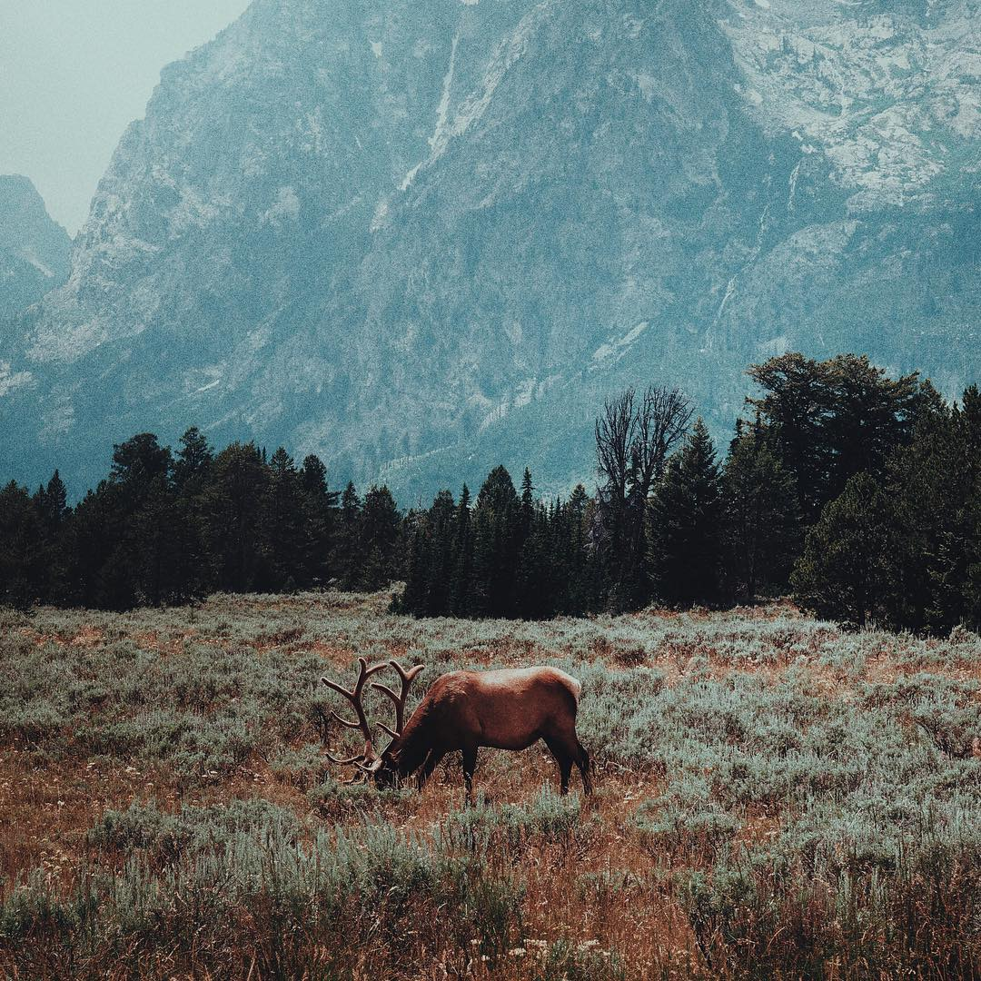 "RADPARKS TAKEOVER w/ @maisymoon -> Grand Teton National Park, 2015 ""Grand Teton was a national park that totally caught me by surprise. Before visiting, I didn't know much about the area other than the fact that it was close to Yellowstone. My original..."