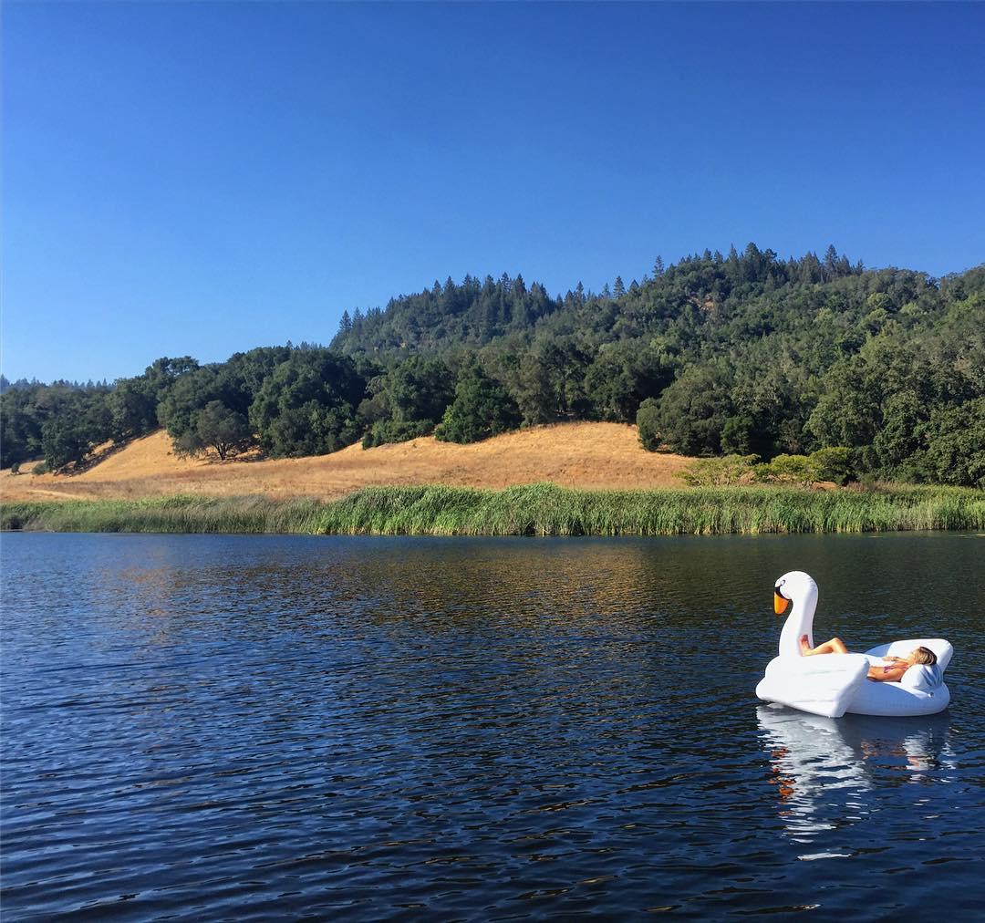 Swan Life #friyay #swanfloat #roadtrippinwithrachel #napa