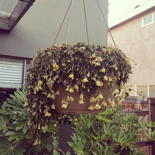 Spring. #droopyflowers #dead #crystalfairy #theycallmelightningsunflower #flowerpower