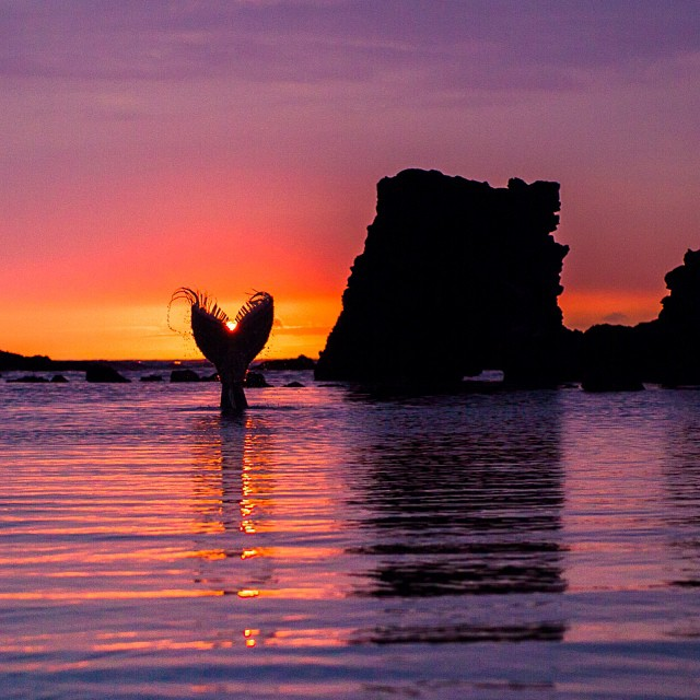 Mermaid sighting. @danamermaid #kukio #mermaid #sunset