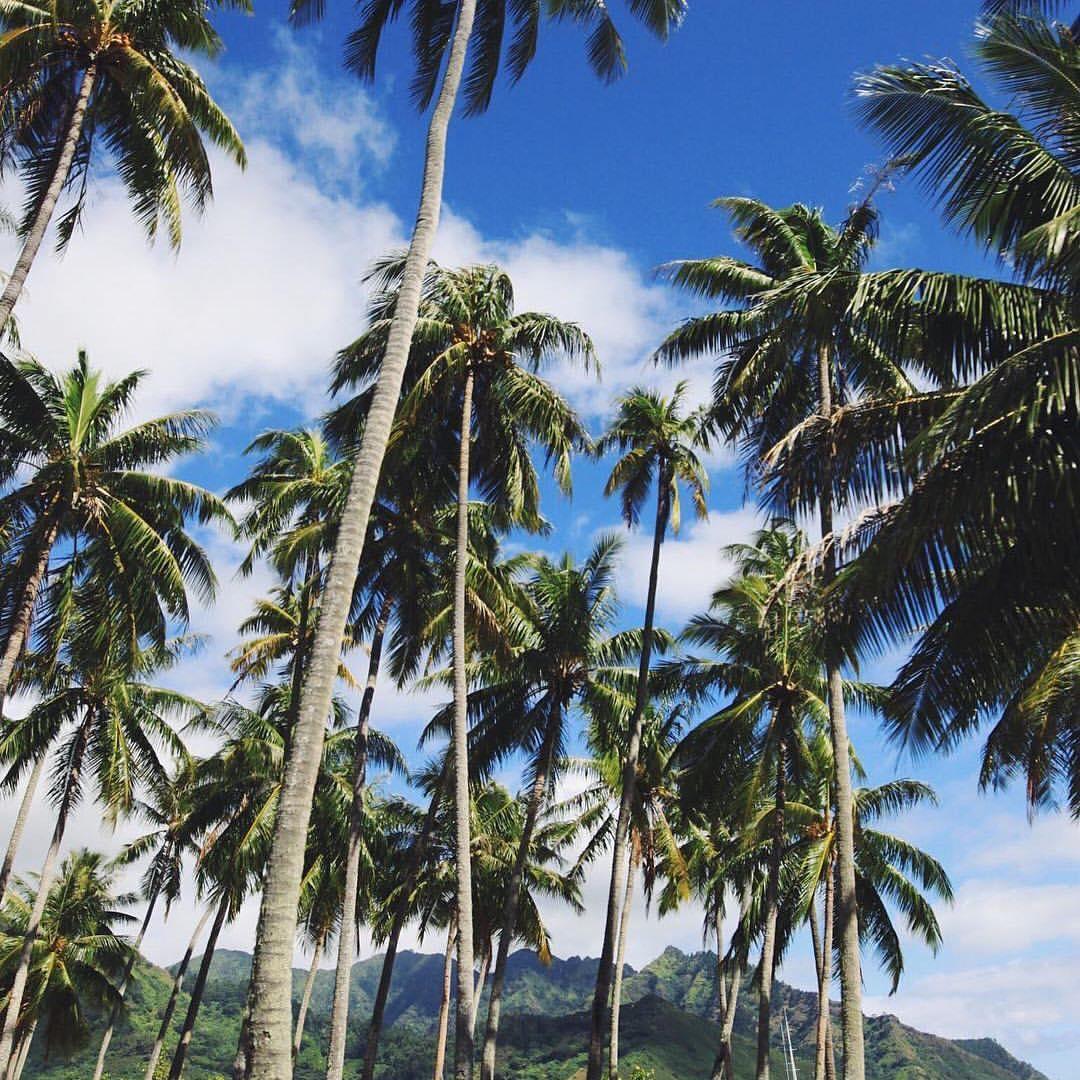 ISLAND VIBES  #repost @bellsmozo #palmtrees #beach #sun #fun #okiinolife Shop OKIINO.com