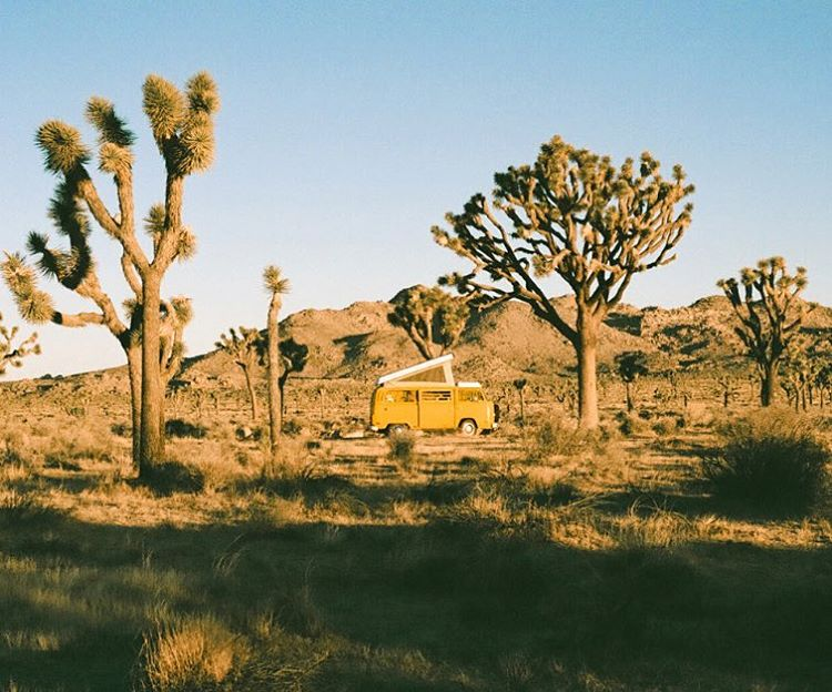 HAPPY WORLD PHOTO DAY to celebrate #worldphotoday we are pleased to share a snap from  @jamesbarkman who is on the road #vanlife visiting #radparks like @joshuatreenps  #outdoorphotography #nps100