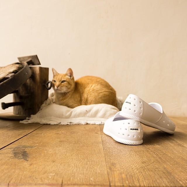 Las HUMMS son como los gatos...siempre salen bien en las fotos. #HUMMS