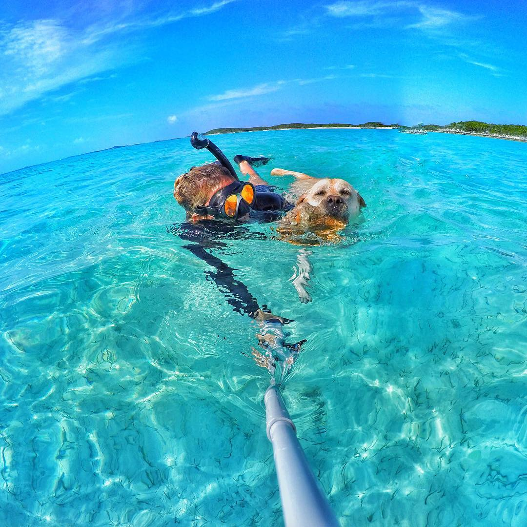 Happy National Dog Day! Photo by @ameliaklonaris. Shot with GoPro HERO4 & GoPole Reach. #gopro #gopole #gopolereach #nationaldogday #