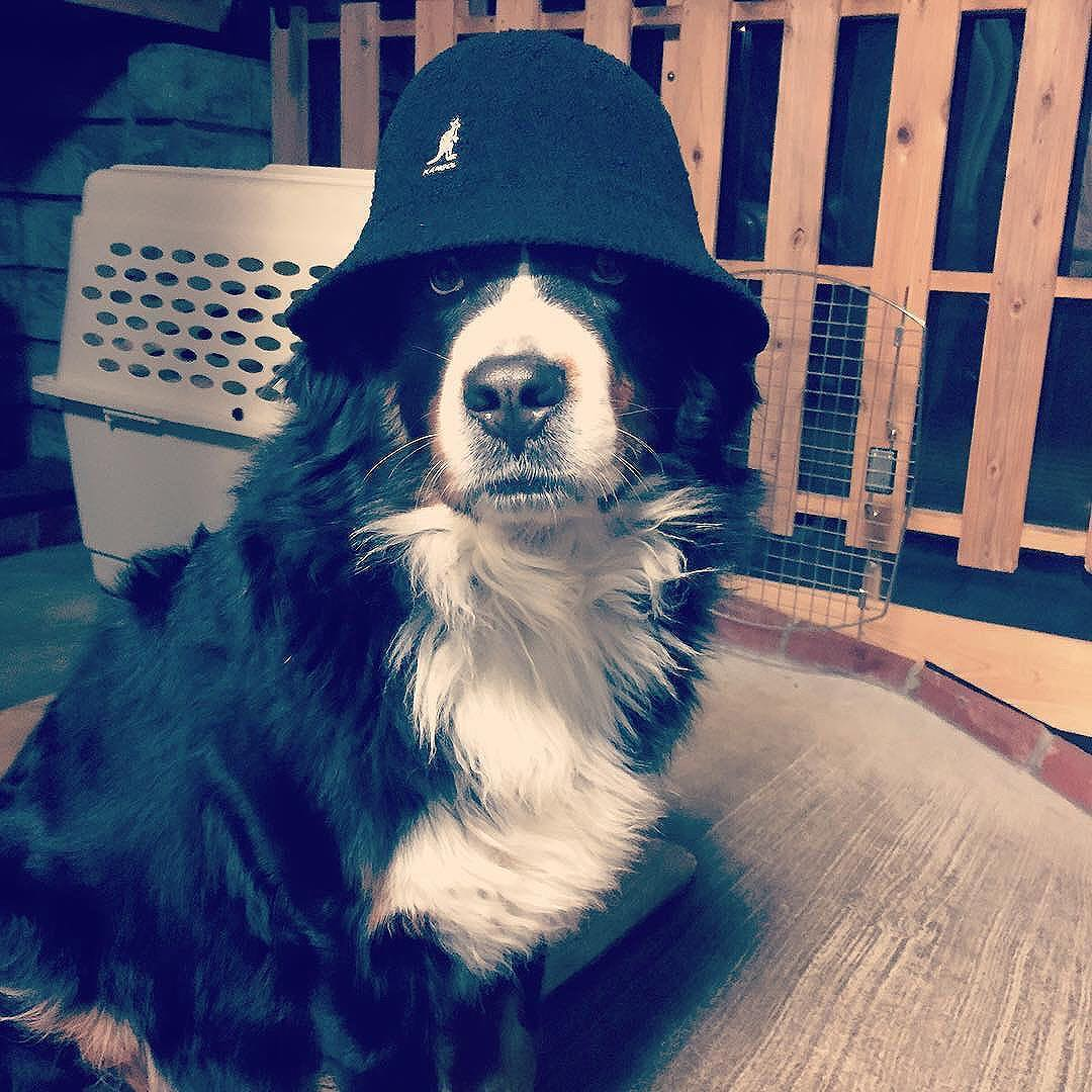 National Dog Day #kangol via MASA