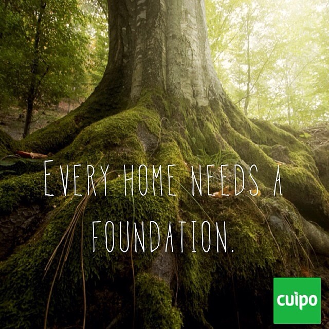 Help us save and protect rainforest around the world. #cuipo #saverainforest #green #earth #tree #trunk