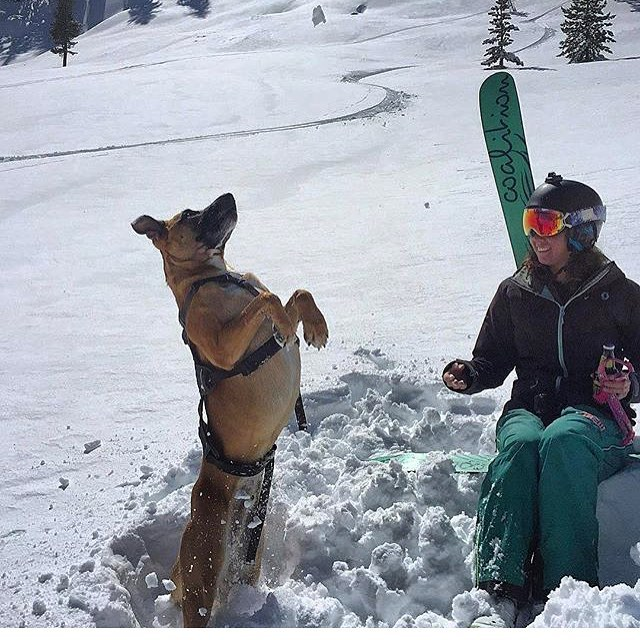 Our skis and boards may not change the world but the women who shred on them will. Celebrate #womensequalityday!! And here's a shout out to woman's best friend on #nationaldogday too.