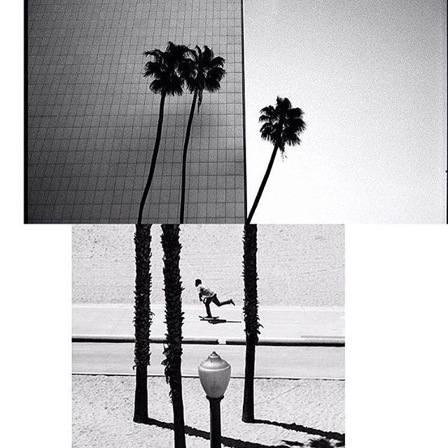This photo is a collaboration between #ElementAdvocate Fred Mortgane (@frenchfred) and the very talented @kylemyles >>> As a joke Fred told Kyle that the palm trees on the image he shot were the bottom portion of the top image that had been previously...