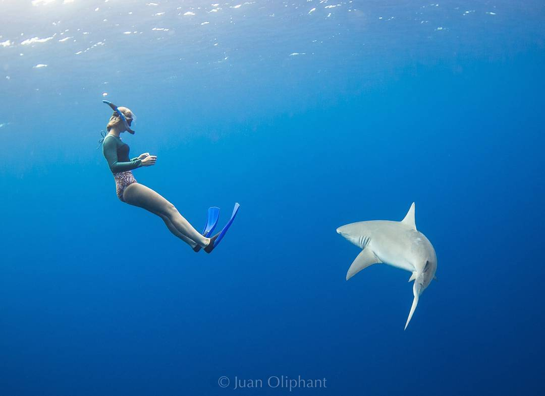 Fascinating, goosebump-inducing and misunderstood ancient sea creatures, when we dive underwater, we enter their home. @MollieMathiesen shares her experience on the blog about working with @OneOceanDiving to dispel myths about sharks and share the...