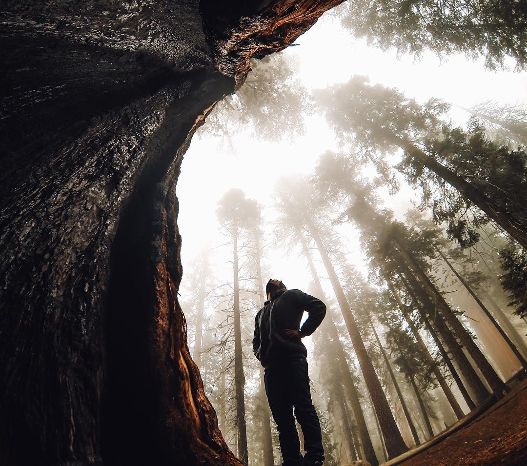 #NPS100 - Staring into the mist st @sequoia_kingscanyon_np, home of the largest #tree