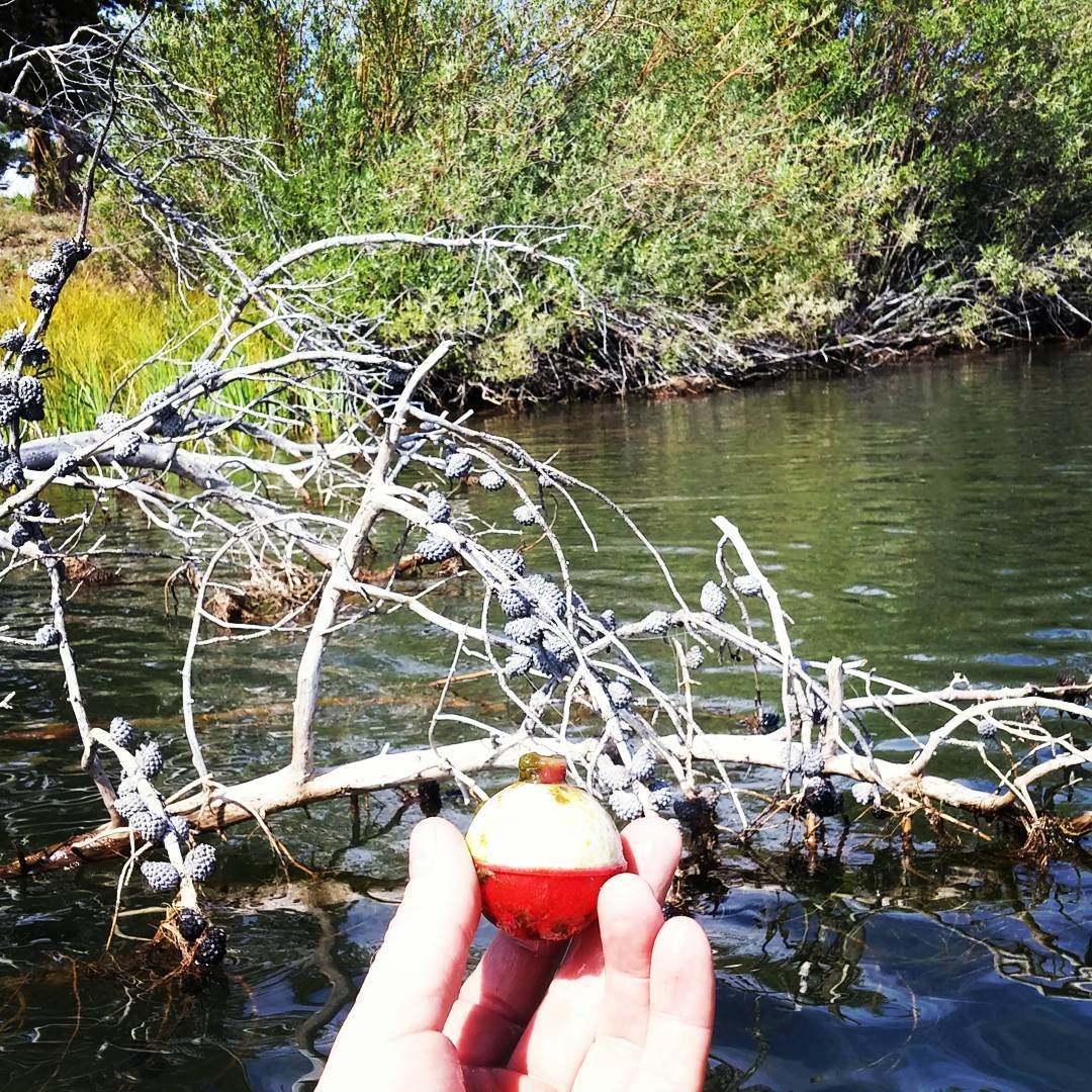 Just saving scenic #lakes on #fishing bobber at a time. Found this one wrapped up in a down tree while #paddling by.