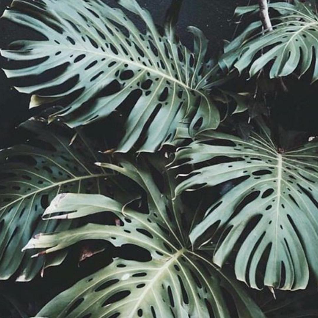 Palm leaves and palm trees may be trending on the 'gram these days, but did you guys know that they have been used to symbolize victory, triumph, peace and eternal life since ancient times? More recently, the palm has found its way onto one of the...