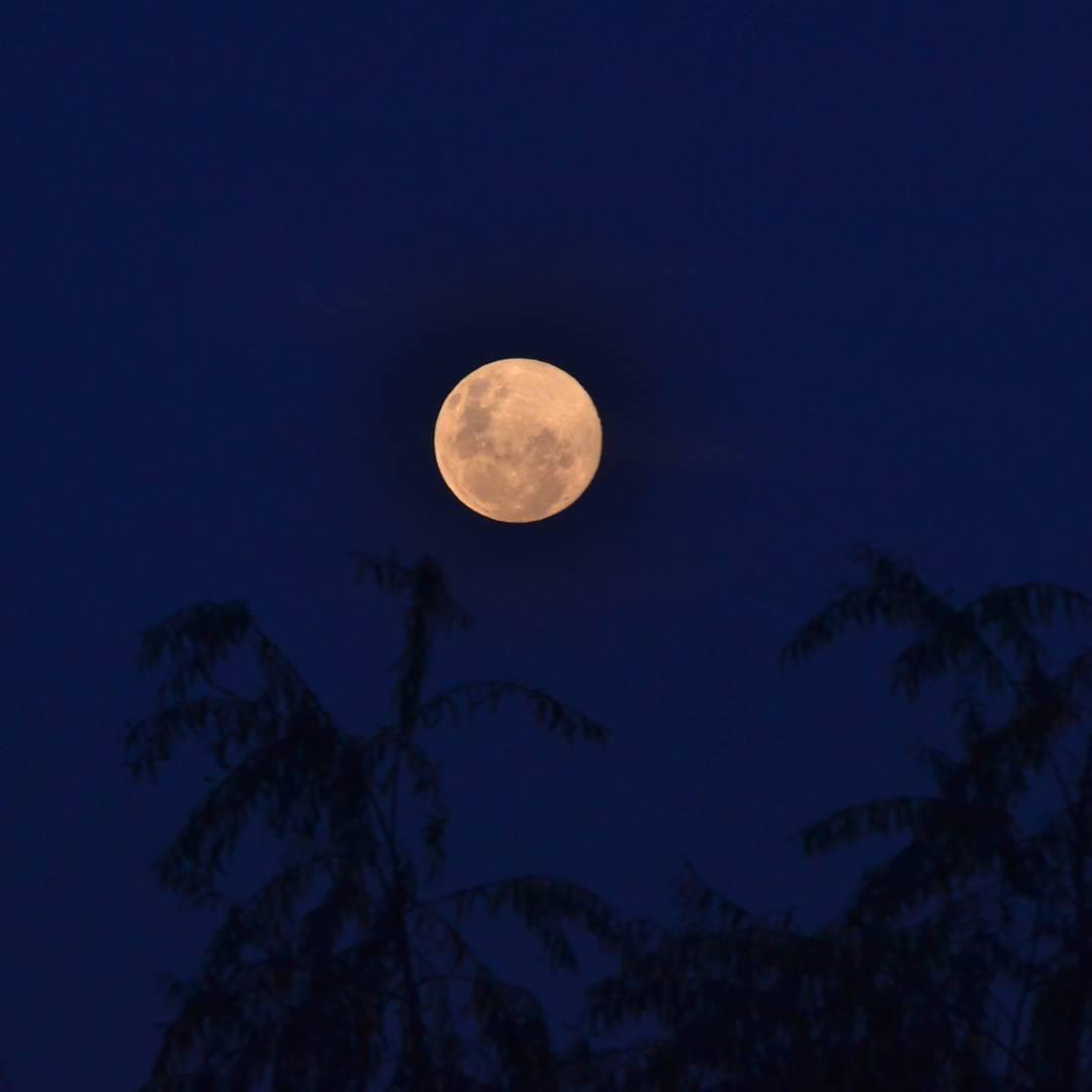 Diria algo como: En su corcel cuando sale la luna... #all_my_own #luna #noche #dark #mood #argentina #ig_argentina #entrerios #theglobewanderer #agean_fotografia #fotografia #picoftheday #sombras #arboles #nikon #d3100 #satelitenatural #sinflash...