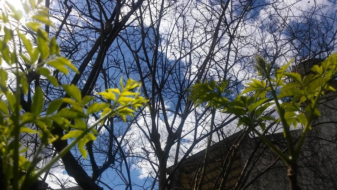No hay mejor filtro que la propia luz del sol. #ph #cielo #sky #sol #nubes #clouds #ramas #albero #vegetacion #vegetazione #contraste #instasky #loveitall