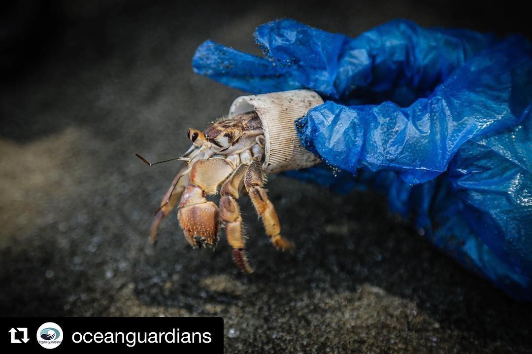 Amazing, yet awful. ・・・ This picture, taken by @beyondthesurfaceintl at a beach cleanup in Bahia Ballena this summer, illustrates without words why we humans need to be #OceanGuardians. This hermit crab was found living in a plastic bottle cap. It...