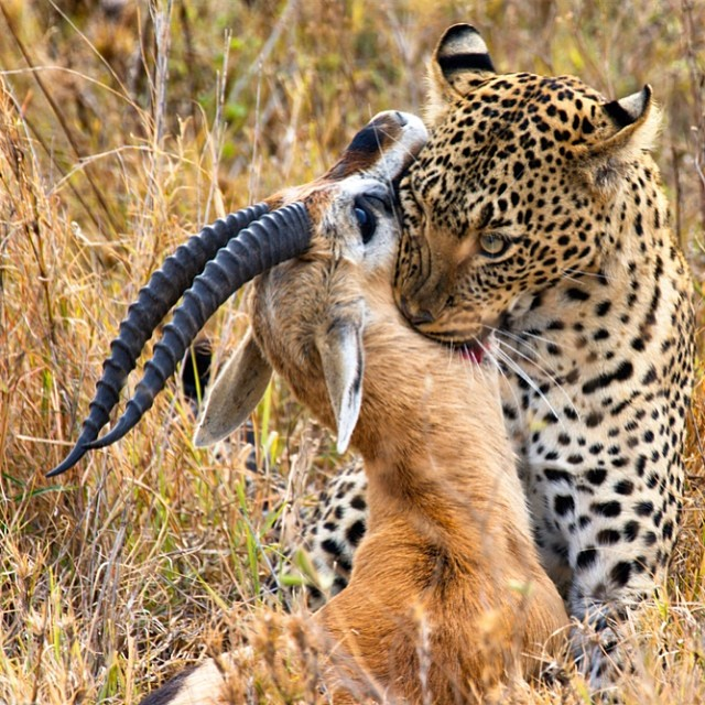 Mothers Day Brunch & Dinner Comes In All Shapes and Sizes : Big Ups & Love To All Moms Putting Food On The Table #lovematuse #loveleopards #happymothersday