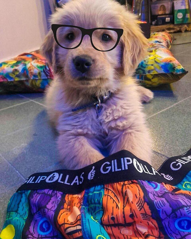 """Nuestro modelo exclusivo Primavera/Verano 2016 """"Milo""""  #Gilipollas #Dogsofinstagram #Underwear"""