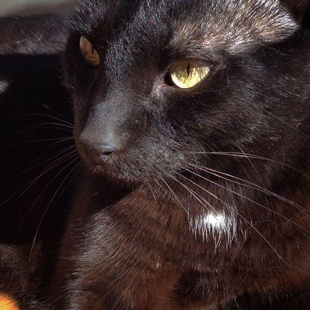 Palito Bombom Helado #catblack #gatonegro #amorgatuno #catsofinstagram #gato #tinto