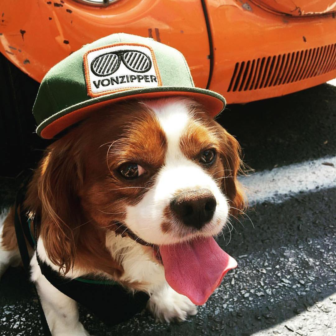 Dog days of summer well spent. Happy #LaborDay for your friends at #VonZipper! || #SupportWildLife