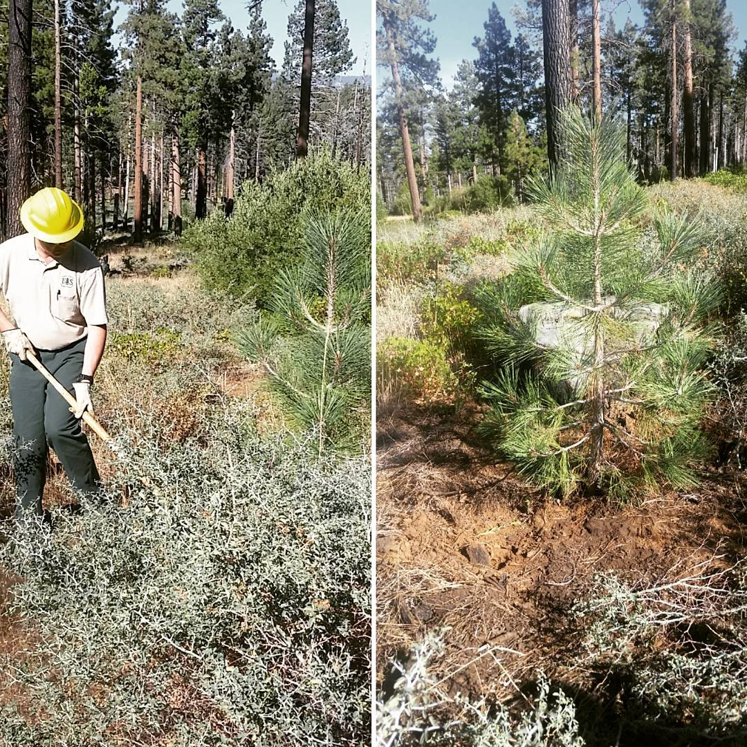 This Saturday from 8:30 am to noon we will be working to restore the Angora Burn area in South Lake Tahoe. Alongside the US Forest Service, Keep Tahoe Blue volunteers will conduct plant treatment/tree protection and trail maintenance. We hope to see...