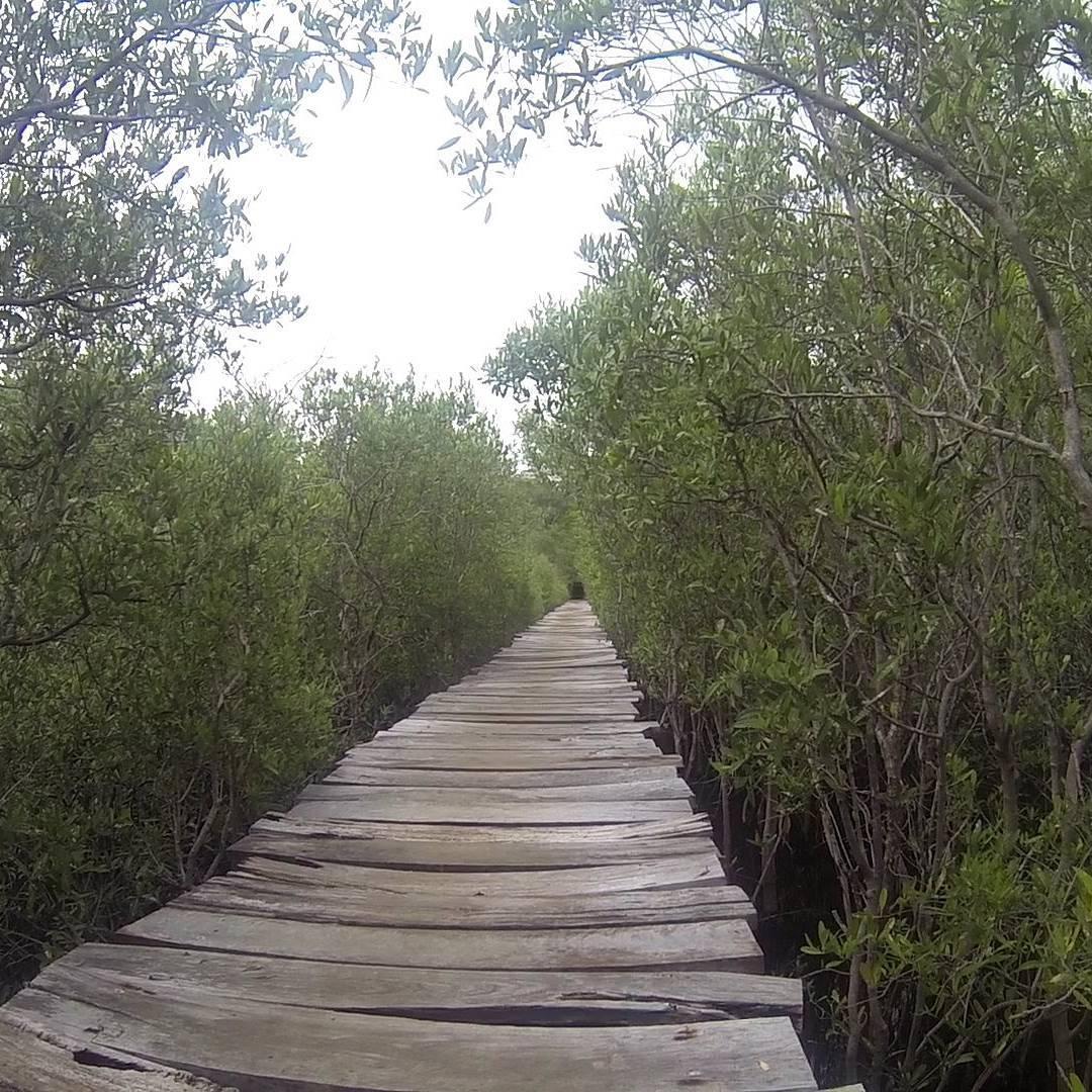 Cerca de playa avellanas, se encuentra este camino que une la costa con el hotel Las Olas. Es una de las tantas playas utilizadas por los surfista. Costa Rica. #all_my_own #camino #descubrecostarica #playaavellana #costarica #estaes_america...