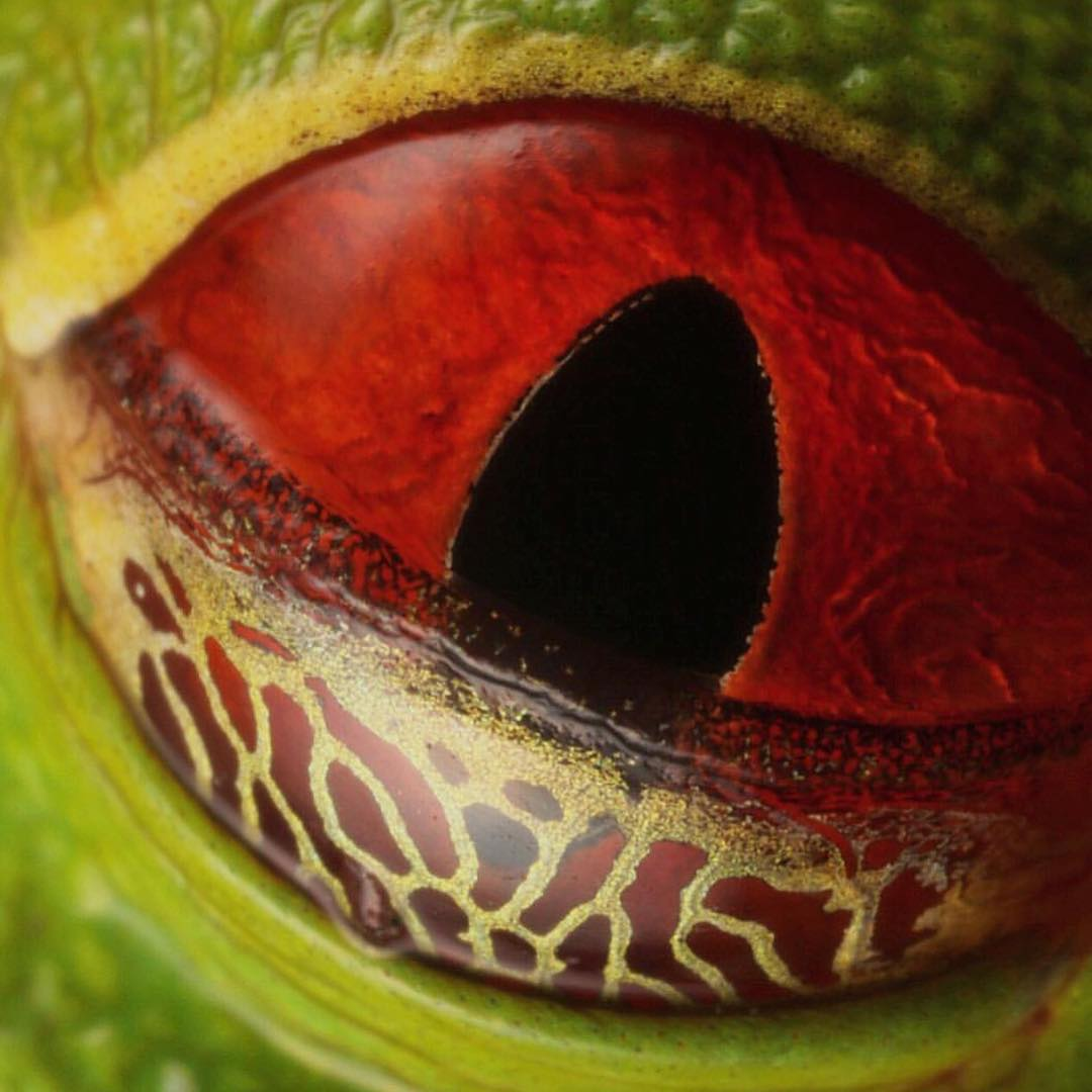 @phil_torres' close up of a #redeyetreefrog eye is incredible! #Cuipo #SaveRainforest #Eyelids #Treefrog
