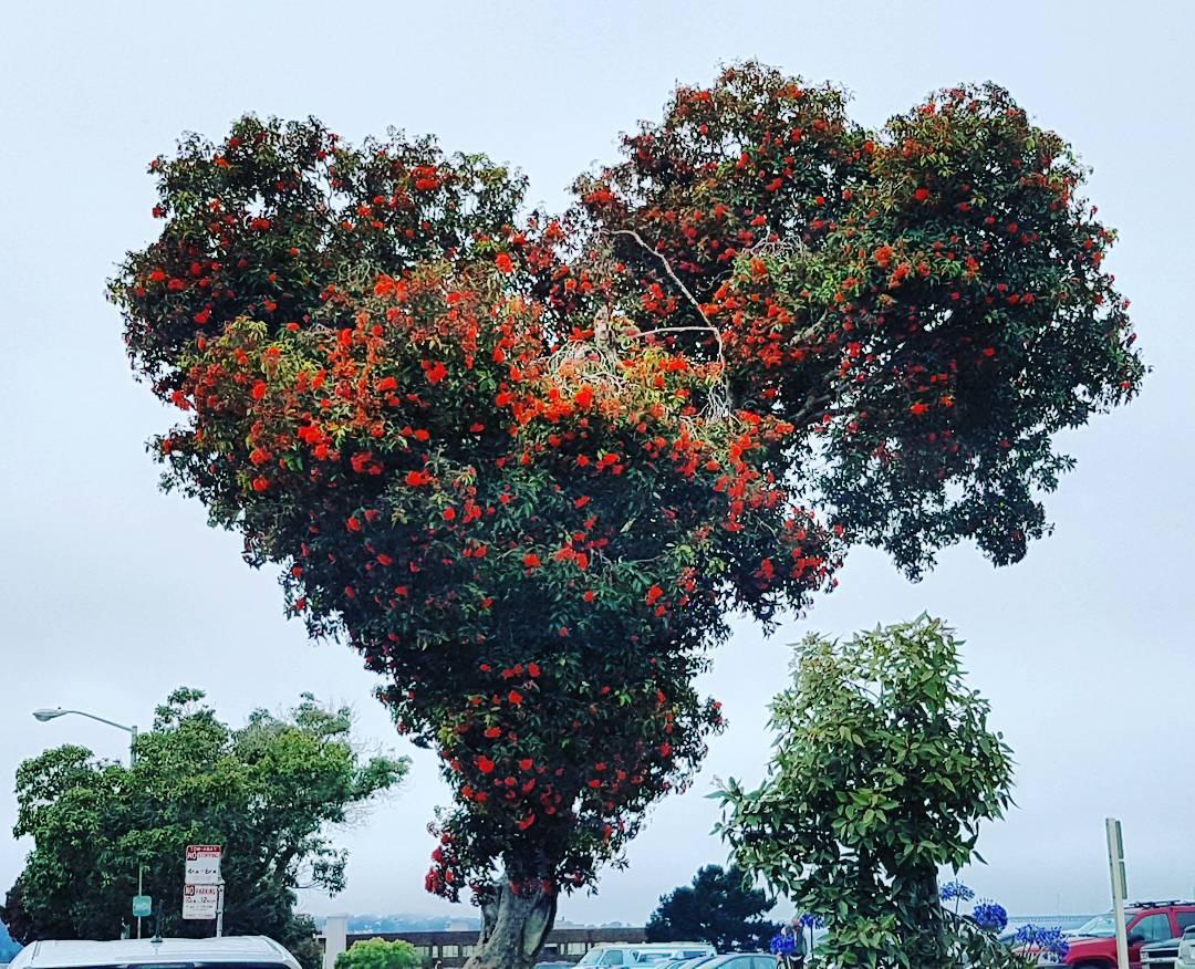 El #amor esta en todos lados. Todos podemos mirar, algunos podran ver, pero pocos lo podran sentir.