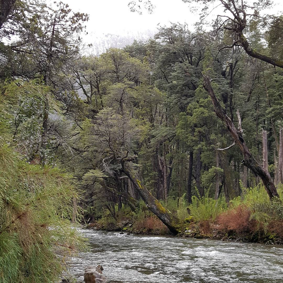Cuando me hablan de la naturaleza, se me viene a la mente este tipo de paisaje. #nature_superpic #onlysouthamerica #paisaje #argentina #samsung6edge #rio #salvaje #neuquen #villalaangostura #creacion #outdoor #all_my_own #estaes_america...
