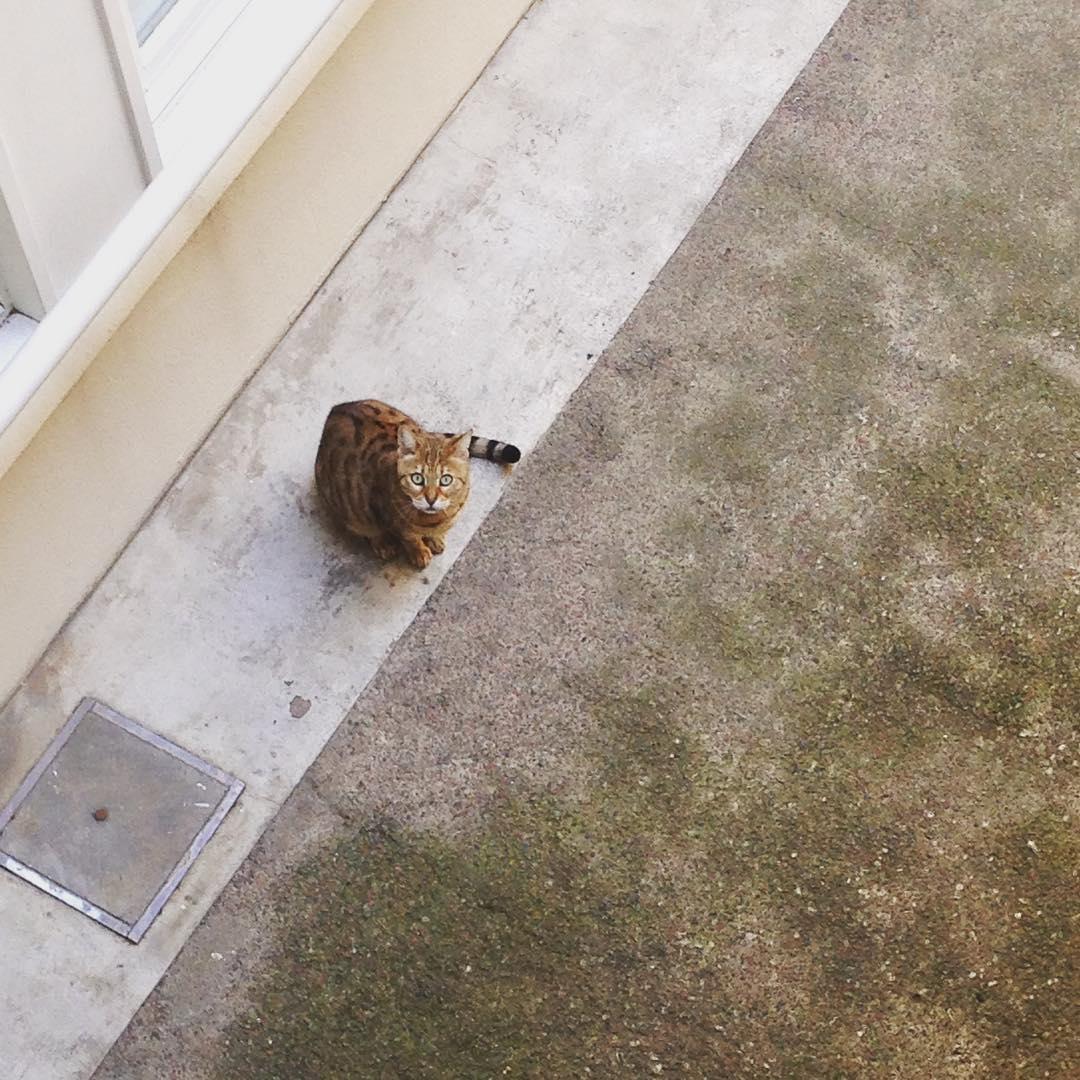 Un vecino