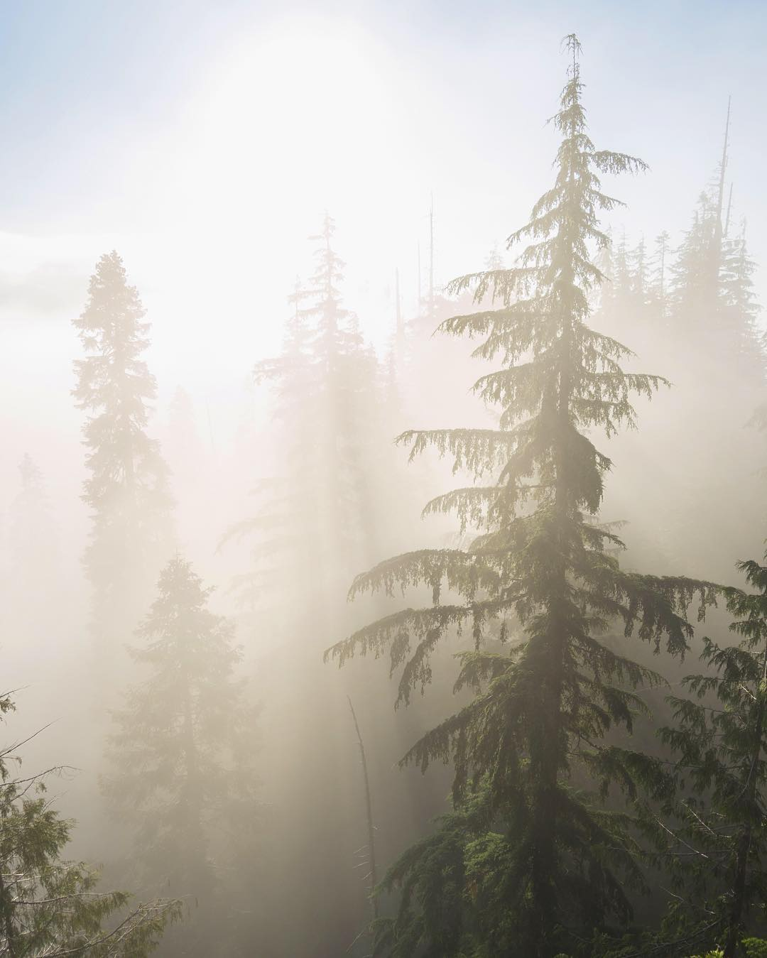 Foggy mornings in Olympic National Forest.  #NatureOfProof photo by @nick_terrel