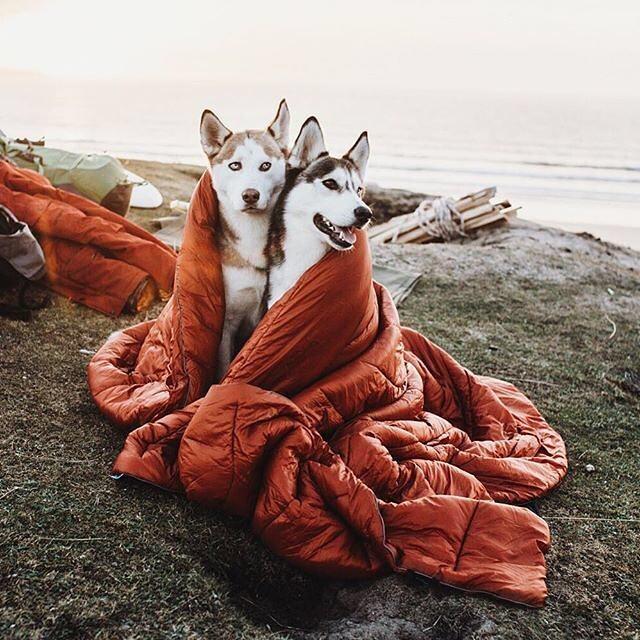 2 Huskies, 1 Rumpl...