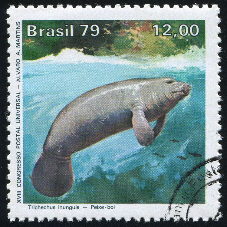 Vintage stamp printed by Brazil, showcasing an Amazonian #manatee, circa 1979. #Cuipo #SaveRainforest #ParaBrasil #WildlifeWednesday