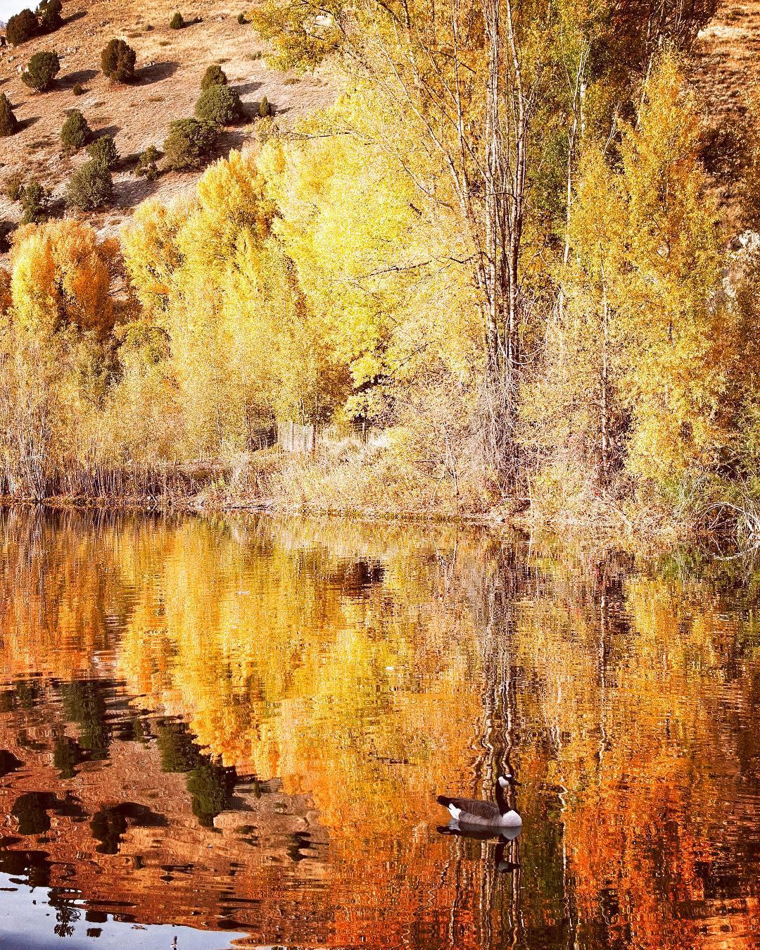 Fall in Jackson Hole be like
