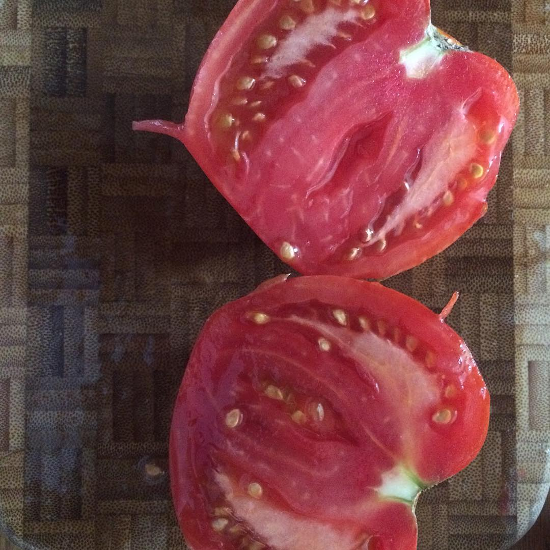 What the inside of a tomato should look like. #ilovemygarden