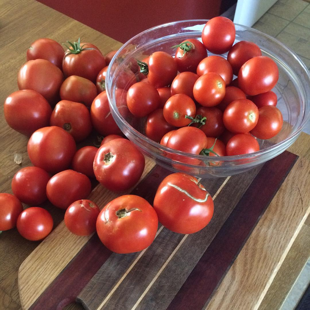Time for pizza, pasta sauce, and salsa. #iloveourgarden