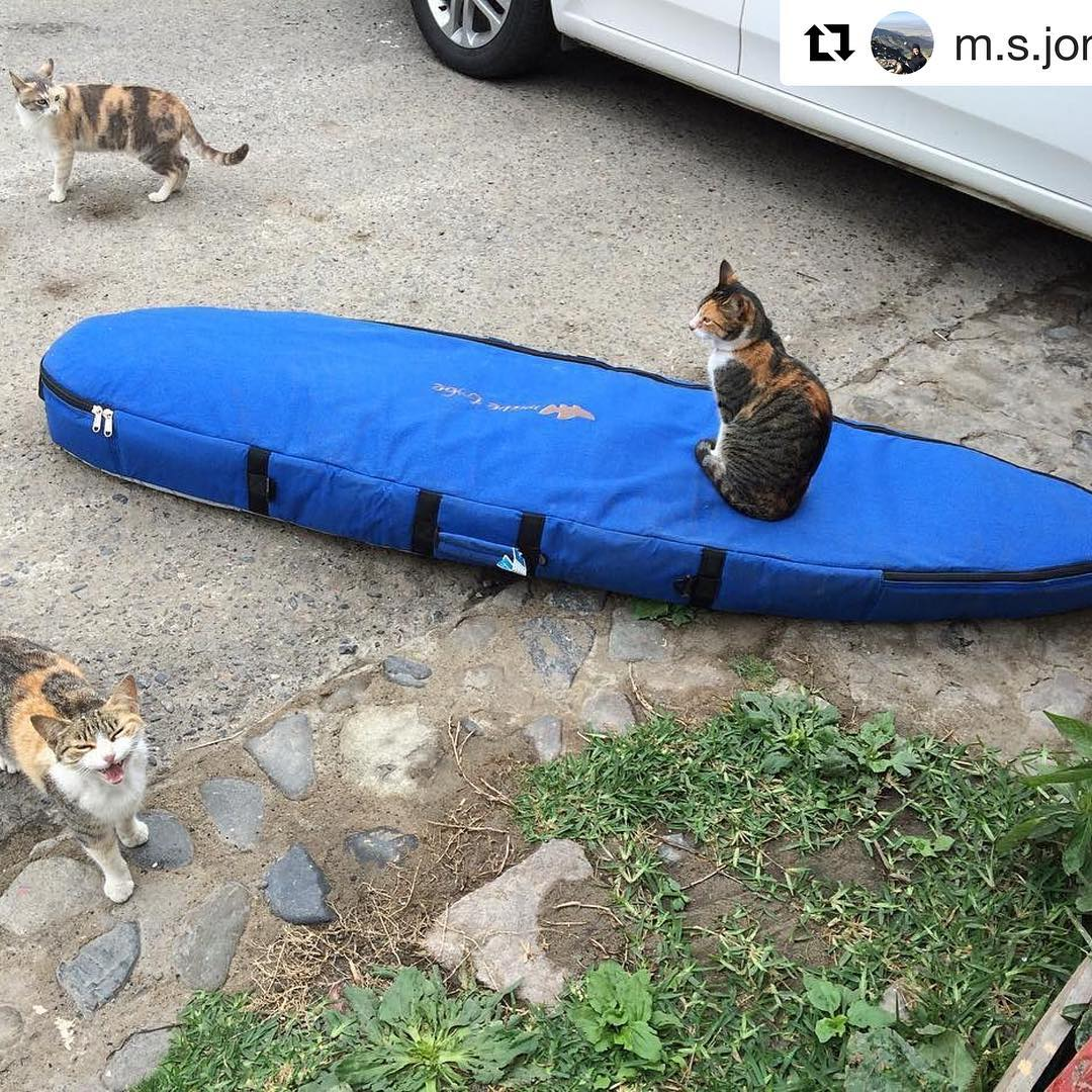 #Repost @m.s.jonez ・・・ #wavetribe the most cat friendly #boardbags on the planet. #surfing  #surftrip #surfboard