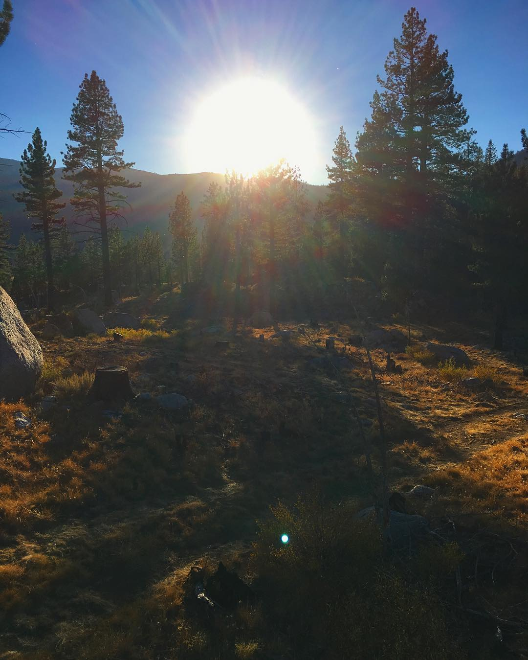 Fall sunsets in the woods. #inspiredbynature #drivenbydesign #risedesigns #risedesignstahoe #tahoelife #tahoesouth #hopevalley #sunburst